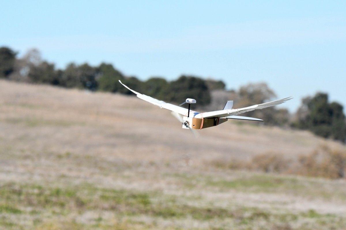 Стэнфордын судлаачид шувуу шиг өдтэй дрон бүтээжээ